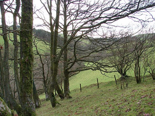 Woodland and pasture in Cwm Bronfelen