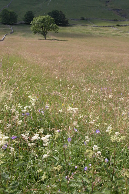 Wildflowers in a meadow in Wharfedale