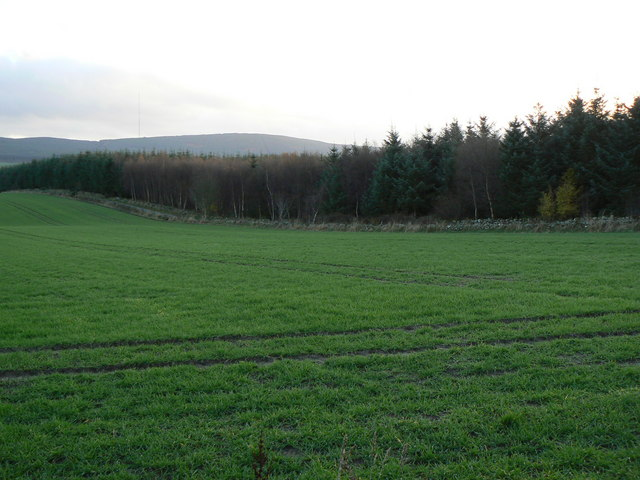 Cairnfauld Forest