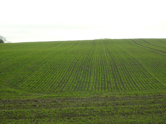 Planted Field Near Dalruscan