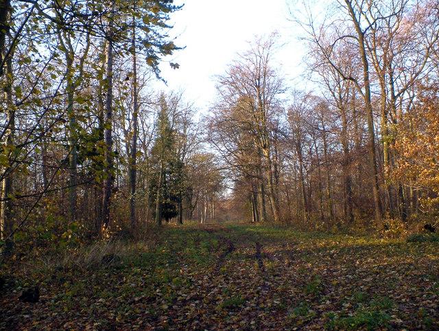 Brompton Dale Wood