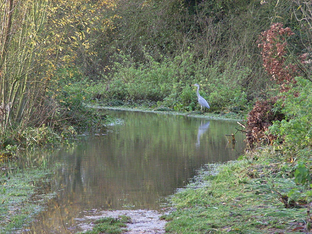 Heron and flooded footpath, Dinton Pastures
