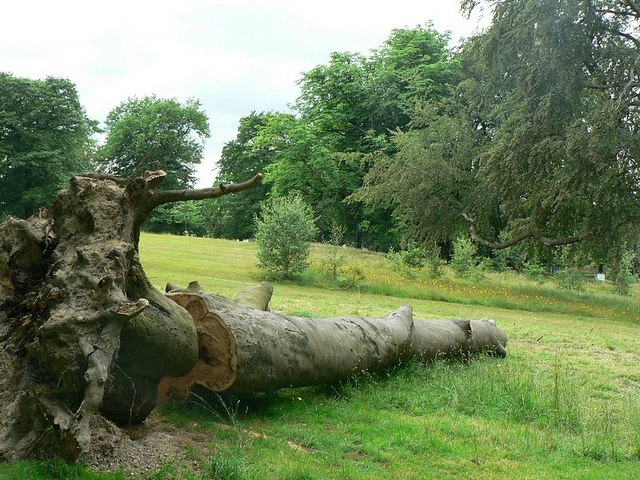 Fallen tree, Clarence Park, Wakefield