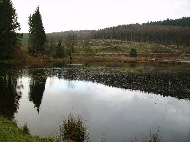 Tarn, Satterthwaite Moor