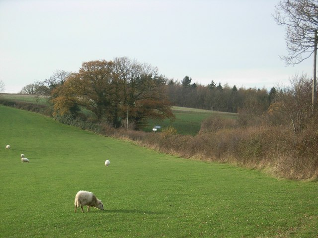 Fields, hedges and Lord's Coppice