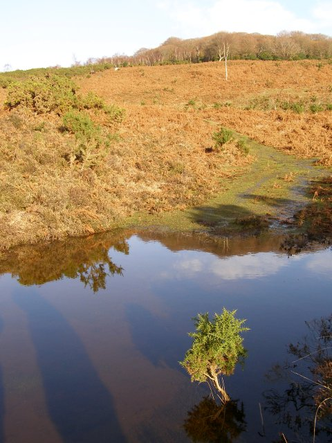 Seasonal pond on Church Moor, New Forest