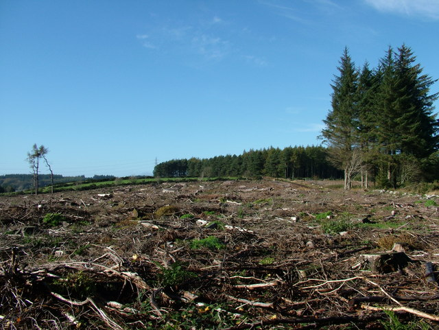 Cleared Woodland at Hazlehead