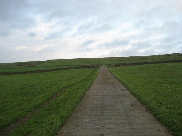 Concrete Track over Green Brackens