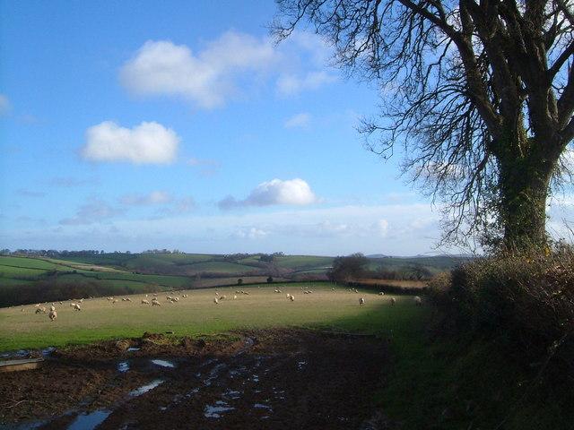 Field near Upperton