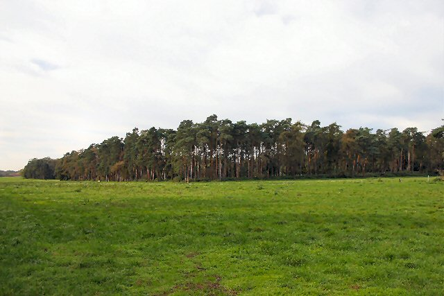 New Covert, West Harling