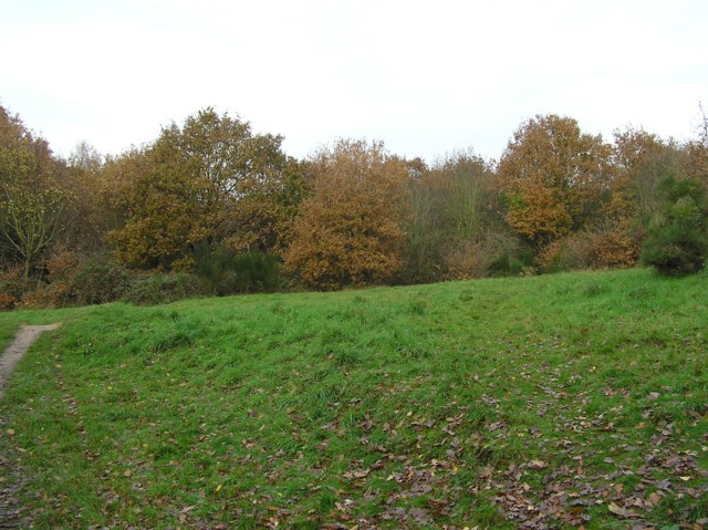 Woodland near Lower Lodge Farm