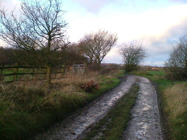 Track to Foxstone Wood