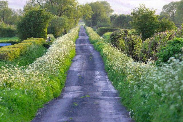 Long Drove,Westbury Moor