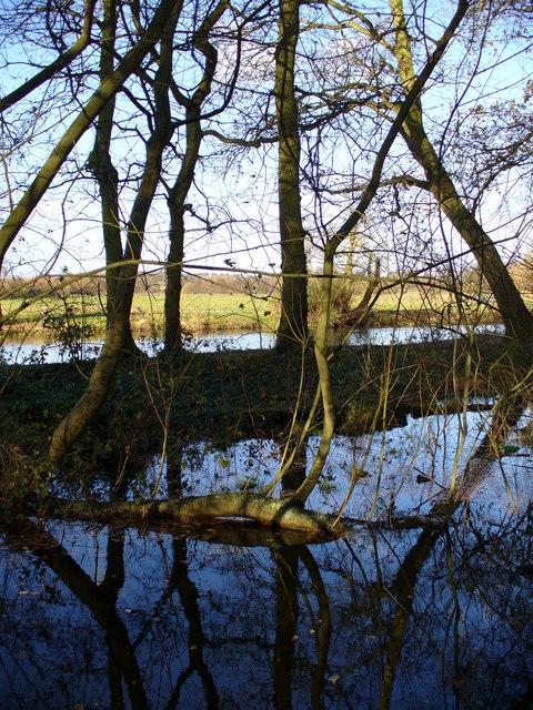 Wetlands, Riverside Park