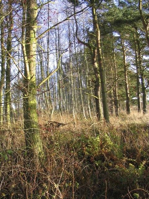 Woodland strip