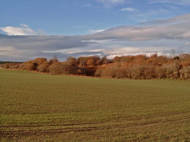 Woodland near Culaird