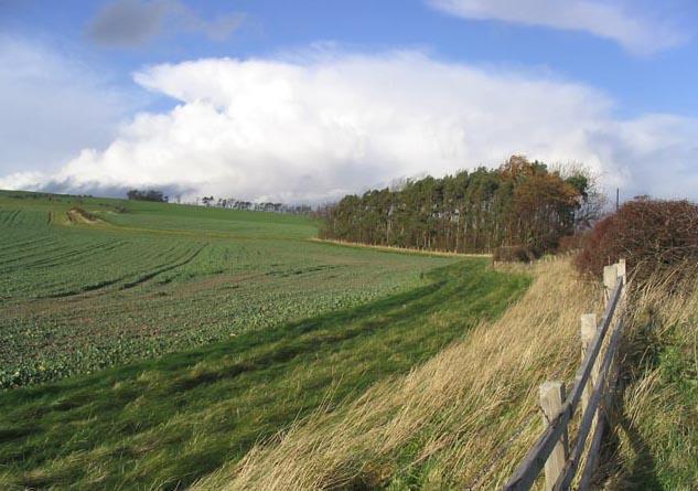 Farmland at Sandy House