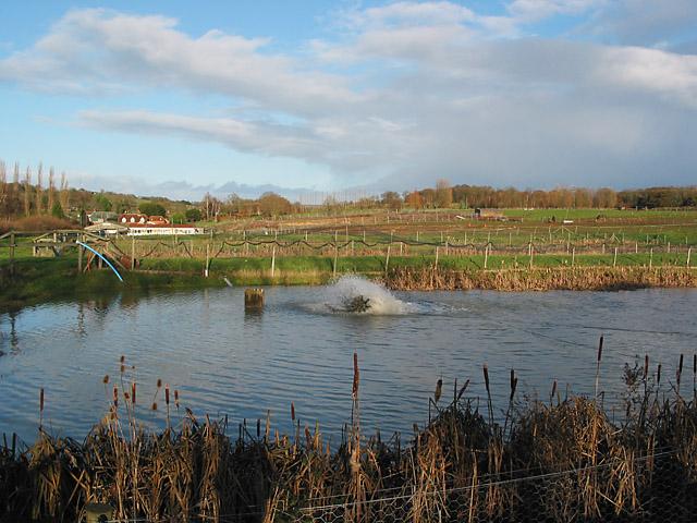 Fish farm in Hensting Lane