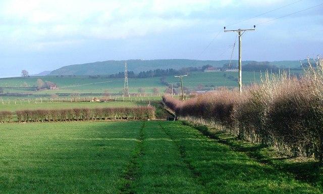 Field Off Long Lane