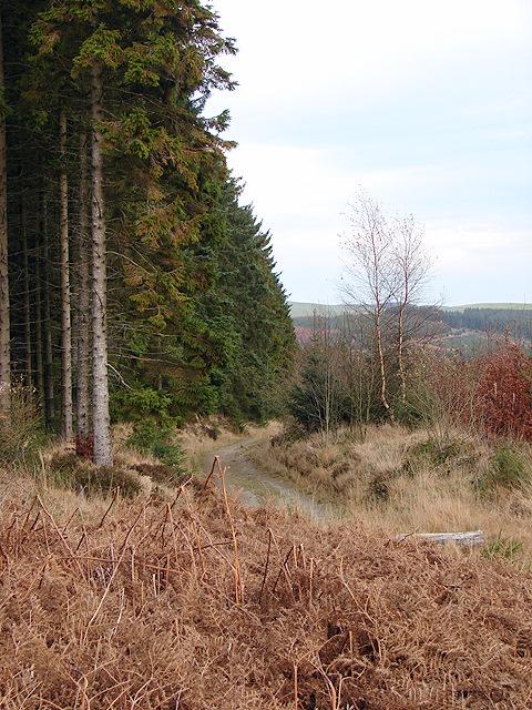 Forestry track at Banc y Ffridd