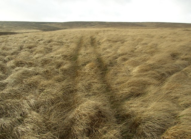 Track towards Oldgate Moss, Marsden