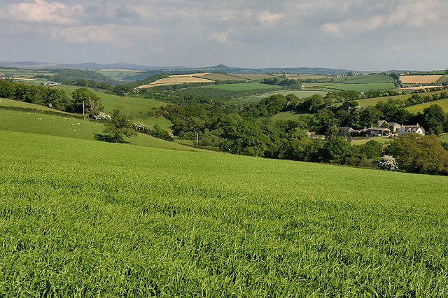 Countryside north of Lifton