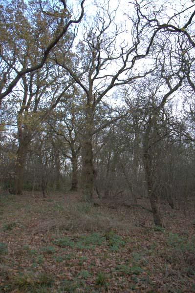 Inside Hildersham Wood