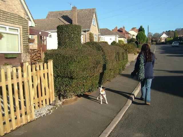 Hedge Training