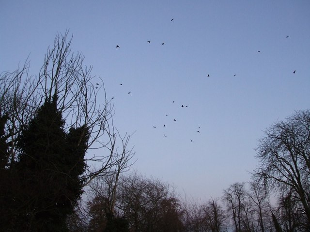 Rooks over Sheepy