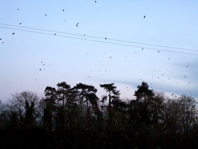 Evening roost over woods