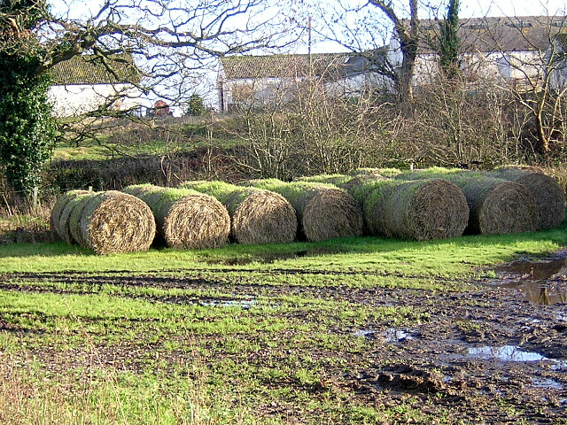 Sprouting Bales