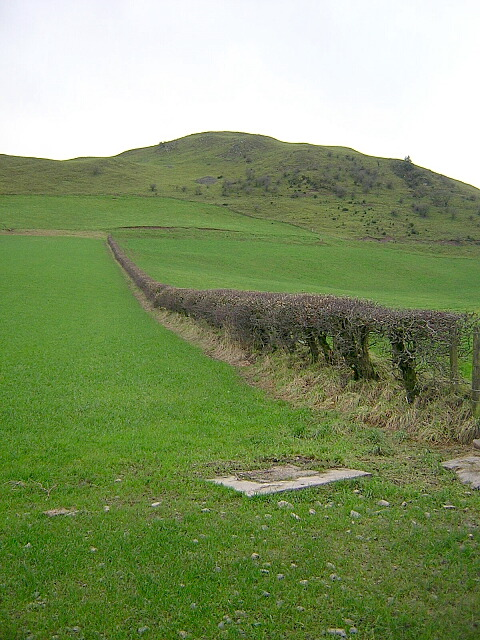 Hillside Hedge