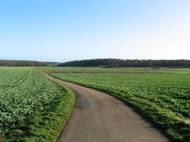 Road running east into Grimsthorpe Park
