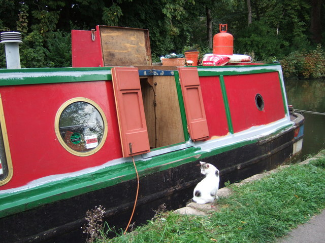 Narrowboat cat, Oxford canal
