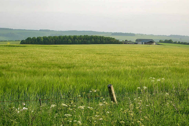 Wheatfield,farm and copse,Salisbury Plain
