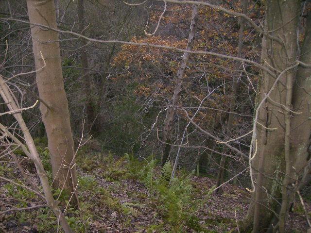 Disused overgrown quarry