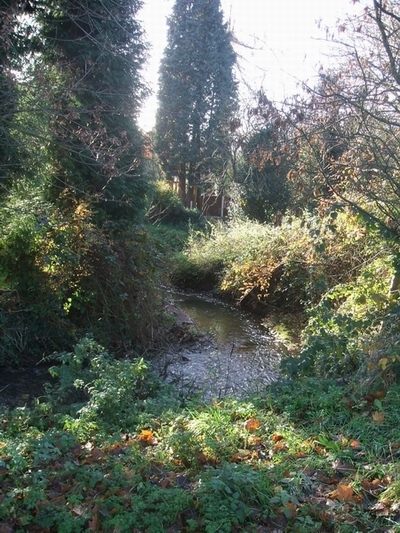 The Wom Brook