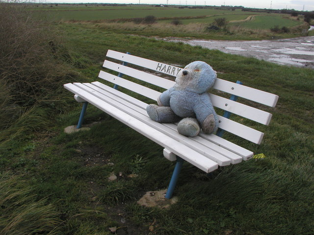 Harry the bench resident at Easington Bank