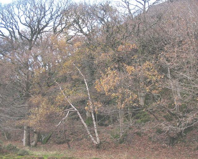 A wooded hillside at Glan y Bala