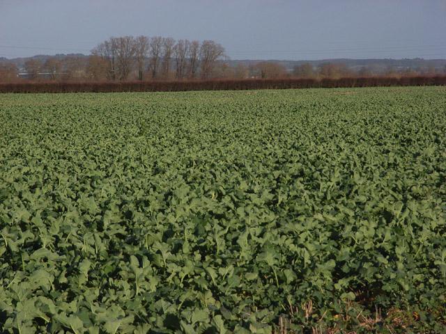 Farmland near Drayton