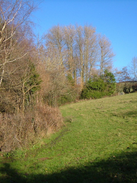 Meadow at East Fingle