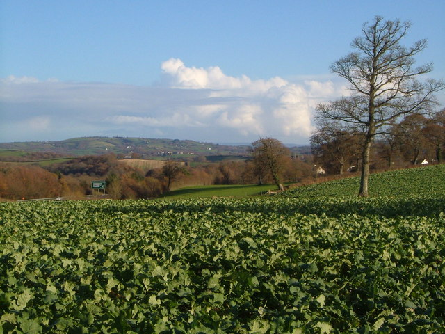 Beet field beside A30