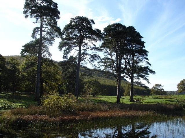 Parkland  at Nether Wasdale