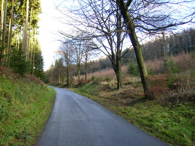 Private forestry road in House Dale - Dalby Forest