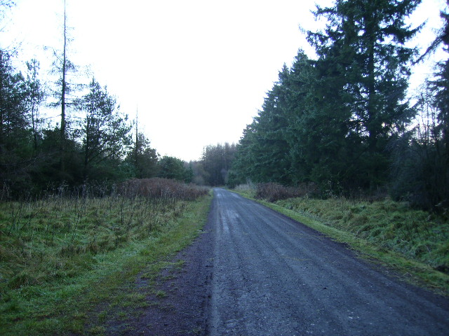 Track at Red Dike in Dalby Forest