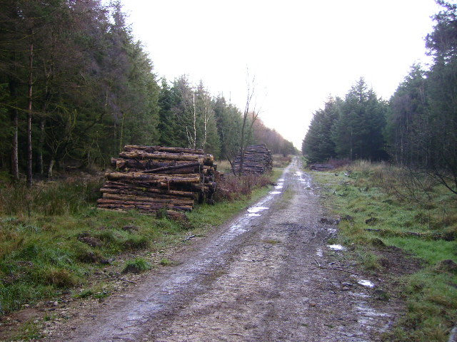 Log piles near Red Dike in Dalby Forest