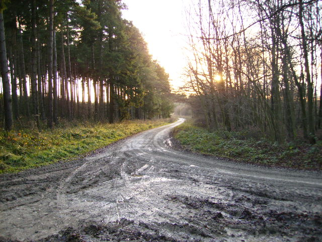 Track junction in Dalby Forest
