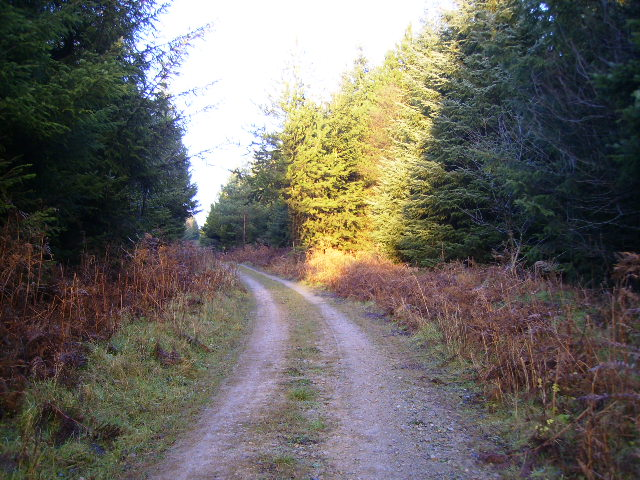Track above Sand Dale in Dalby Forest