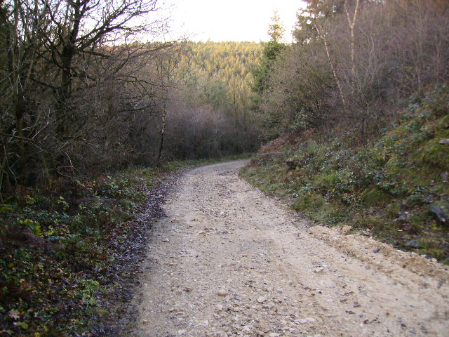 Forestry track at Shoulder of Mutton