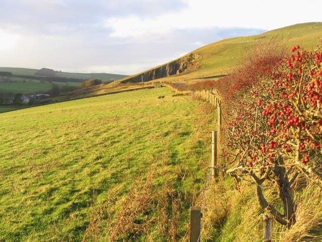 Pasture field near Southdean